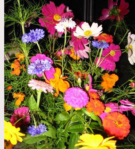 Identier les émotions négatives et les fleurs de Bach correspondantes